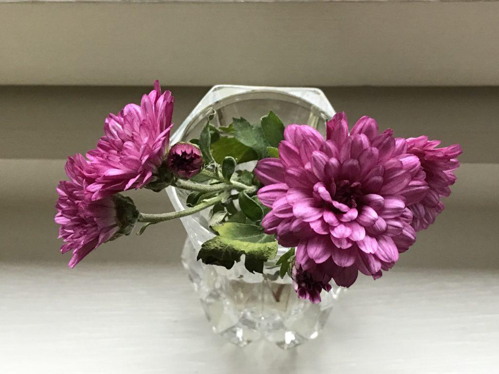 Små lilla blomster i en vase. Sprunget ut fra frosne knopper og et symbol på hva litt kjærlighet og varme kan utrette.