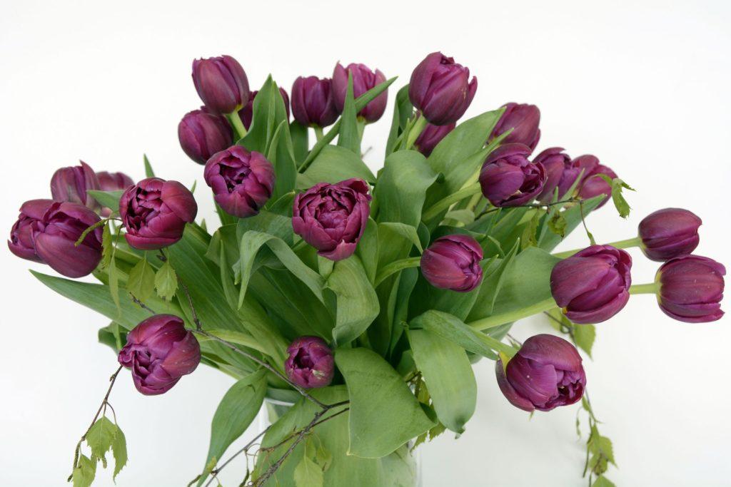 Bukett med lilla tulipaner i en vase.